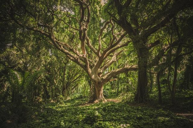 arbre de vie deco